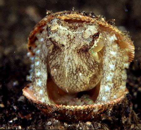 octopusinshell_blog.jpg
