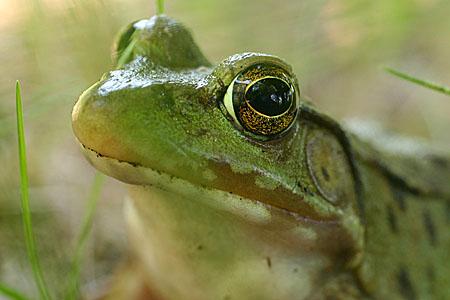 frog_8004.jpg