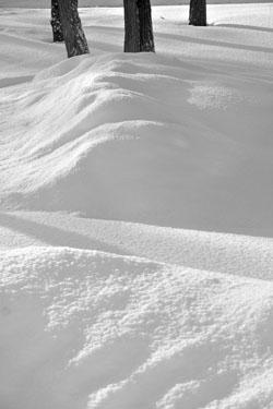 snow_7220.jpg