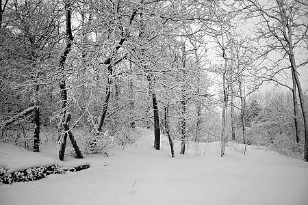 snow_7258.jpg
