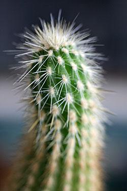 cactus_7335.jpg