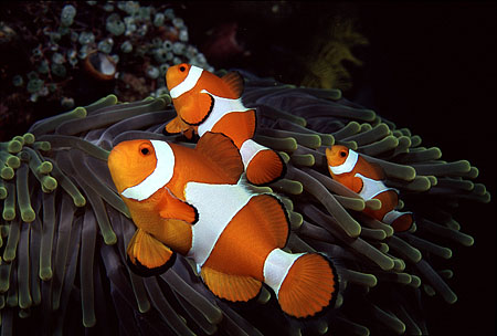 clownfish_blog.jpg