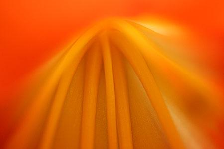 flower_7627.jpg