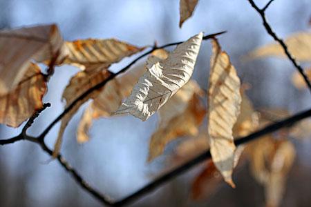 leaves_7558.jpg