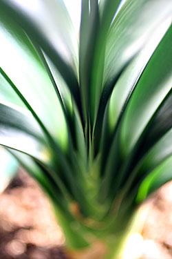 plant_7315.jpg