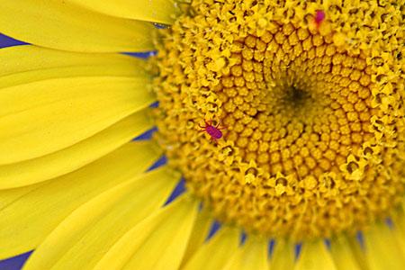 buginflower_blog.jpg