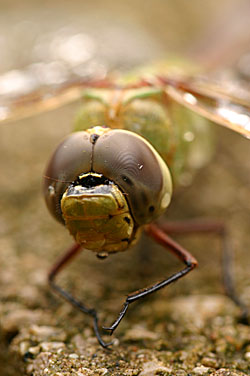 dragonfly_4714.jpg