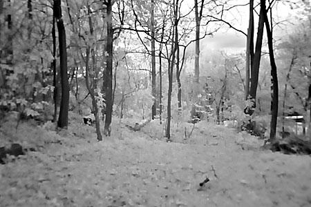 infraredbackyard_blog.jpg