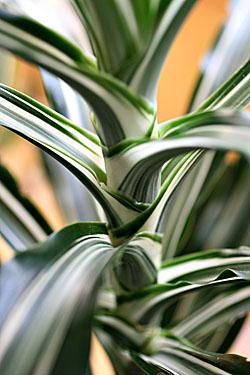 plant_7330.jpg