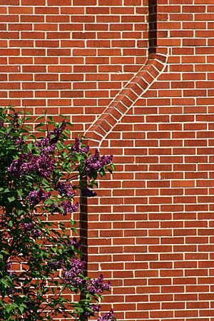 brickwallwithlilac_8093.jpg