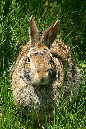 bunny_8067.jpg