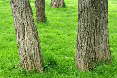 tree_8056.jpg