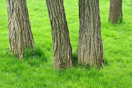 tree_8058.jpg