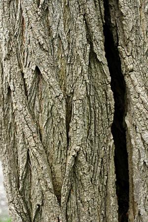 tree_8061.jpg