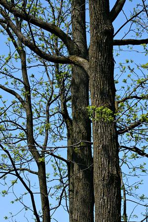 tree_8083.jpg