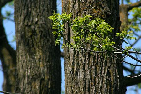 tree_8087.jpg
