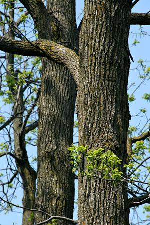 tree_8091.jpg