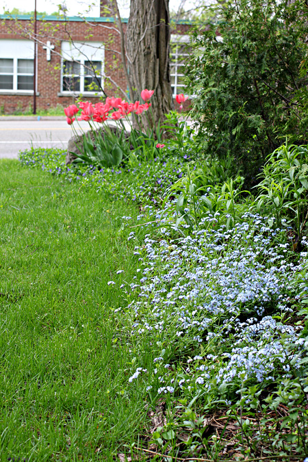 Forget Me Nots and Tulips